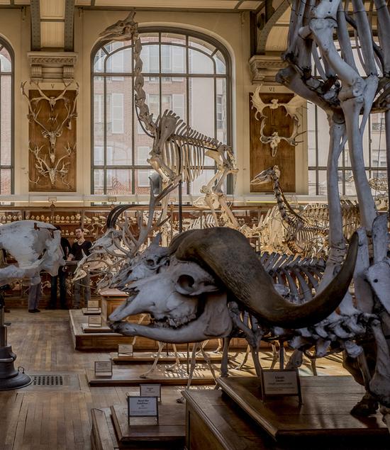 Galeries d anatomie compar e et de pal ontologie jardin des plantes paris 75005 sortir - Jardin des plantes paris horaires ...