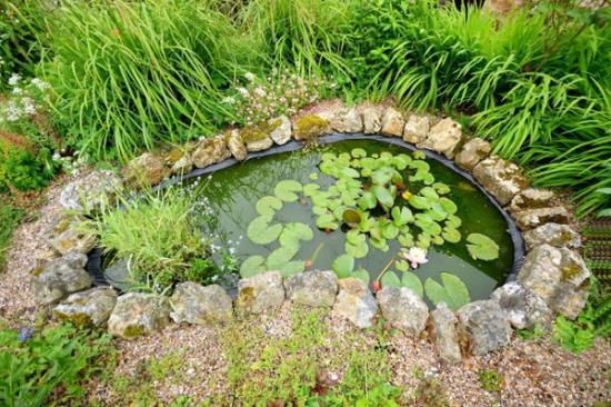 Cycle de 4 ateliers cr er une mare dans son jardin le for Creer son jardin gratuit